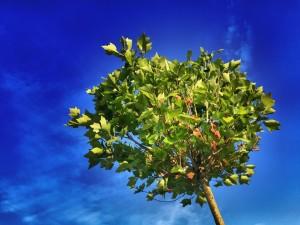 tree-824429_960_720
