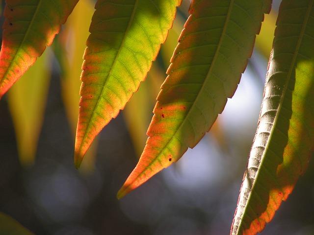 leaves-473098_640