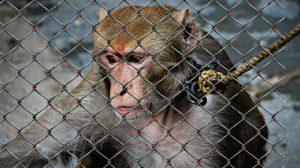 animal-welfare